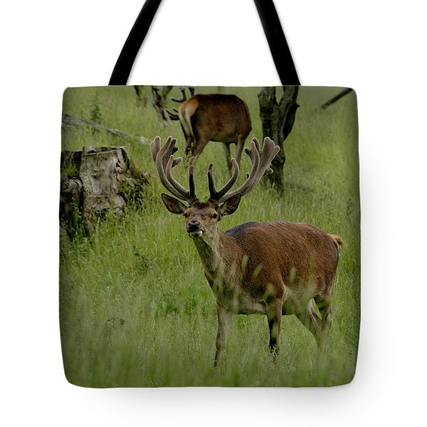 Stag Of The Herd. Tote Bag