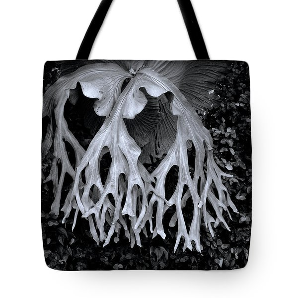 Tote Bag featuring the photograph Staghorn Fern by Wayne Sherriff