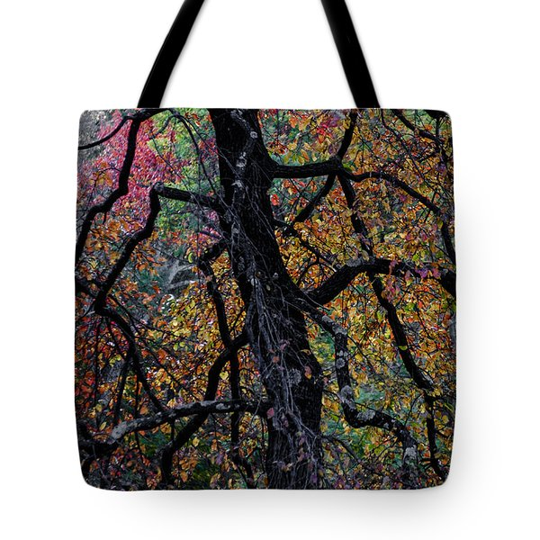 Staind Glass Tree 1 Tote Bag by Kevin Blackburn