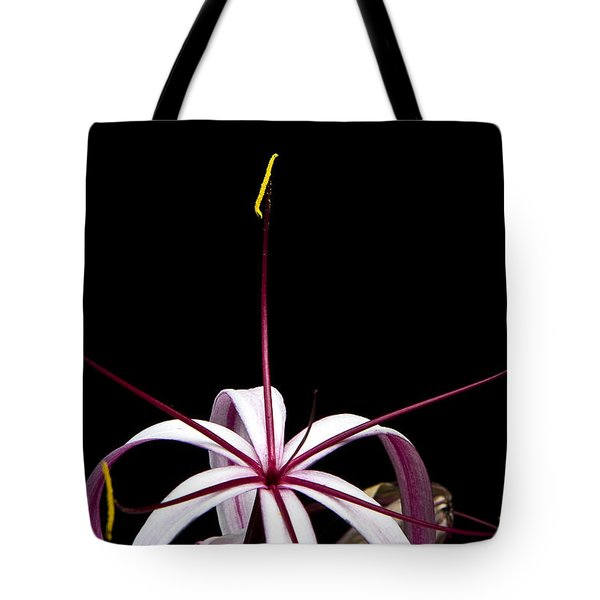 Tote Bag featuring the photograph Star Flower by Ken Barrett