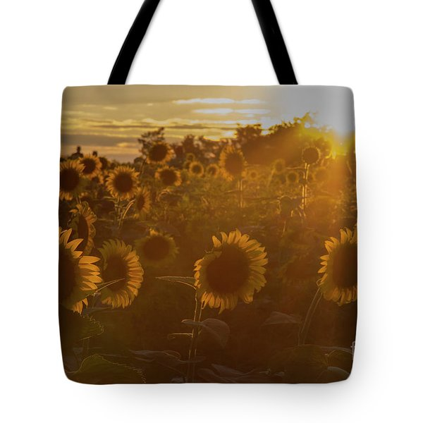 Tote Bag featuring the photograph Star Gazing by Chris Scroggins