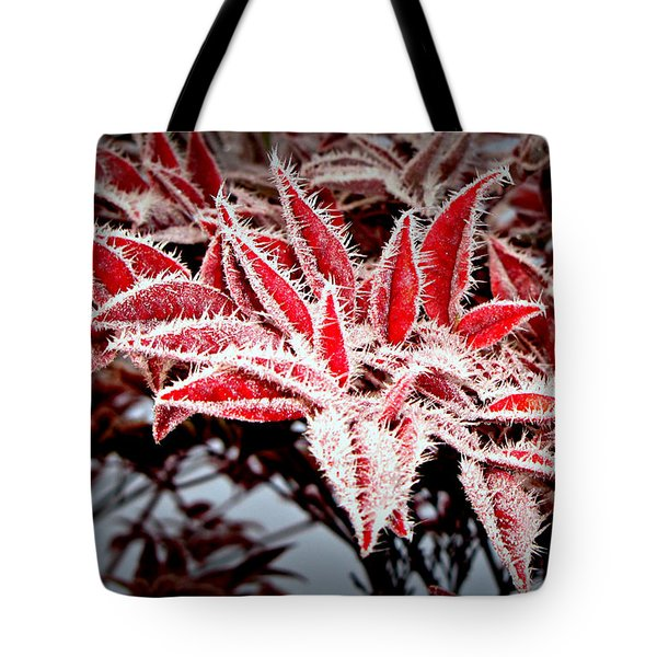 Star Leaves Tote Bag by Katie Wing Vigil