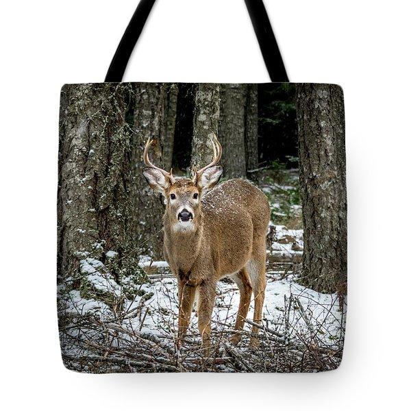 Staring Buck Tote Bag