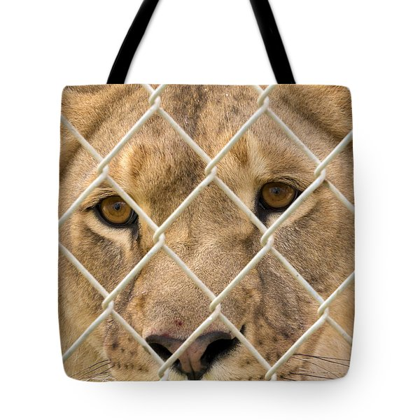 Staring Lioness Tote Bag