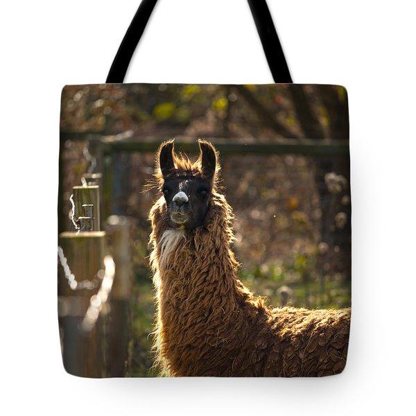 Staring Llama Tote Bag