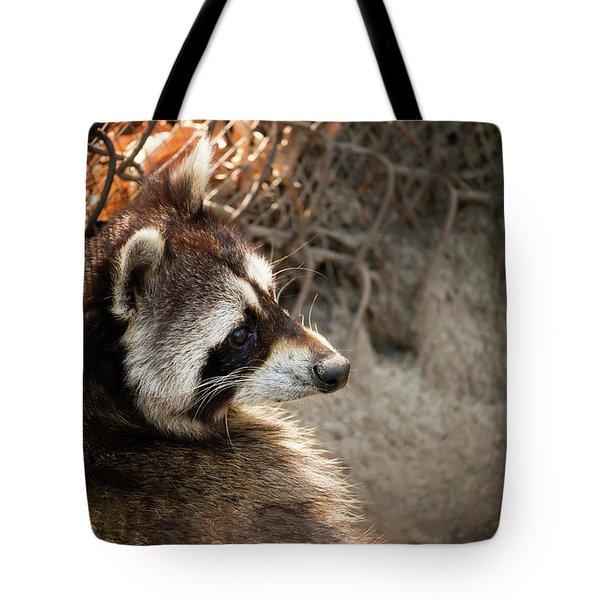 Staring Raccooon Tote Bag