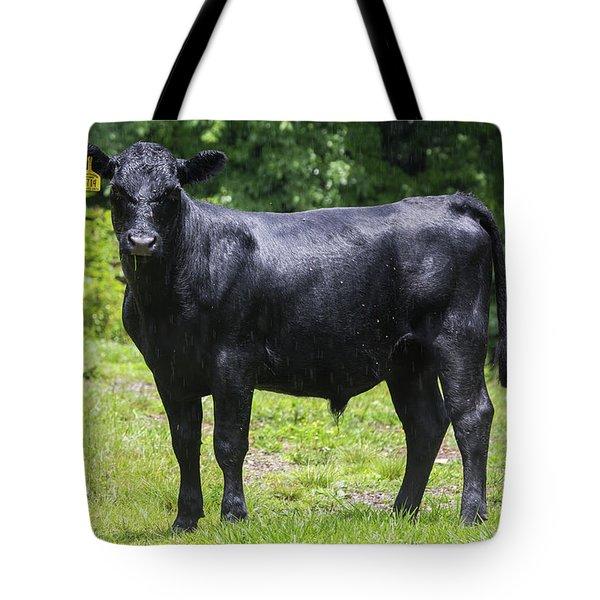 Staring Steer Tote Bag