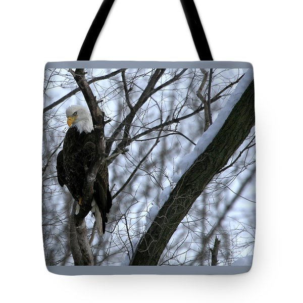 Starved Rock Eagle Tote Bag by Paula Guttilla