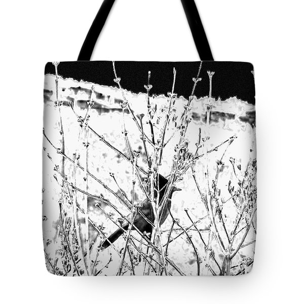 Stellar Jay Tote Bag by Will Borden