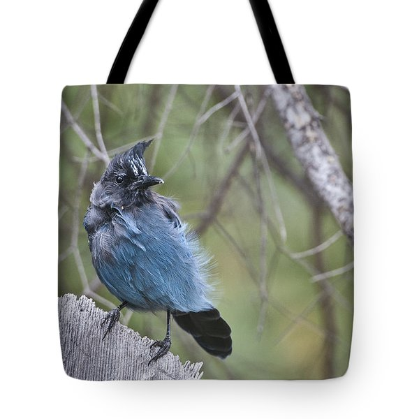 Tote Bag featuring the photograph Stellar's Jay by Gary Lengyel