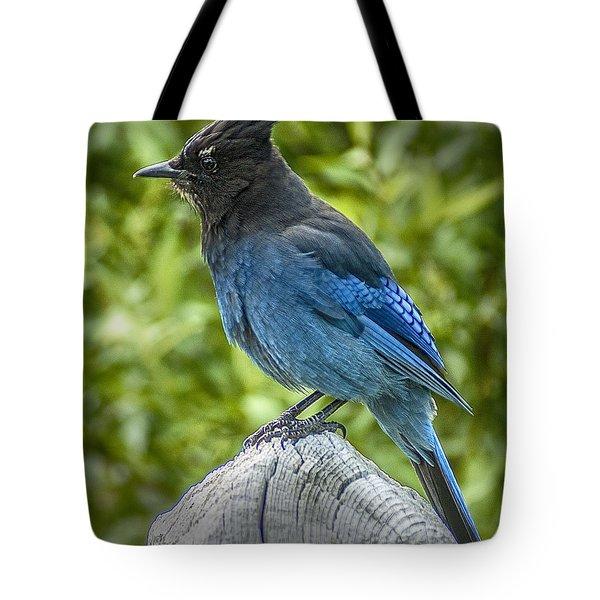 Stellar's Jay Tote Bag