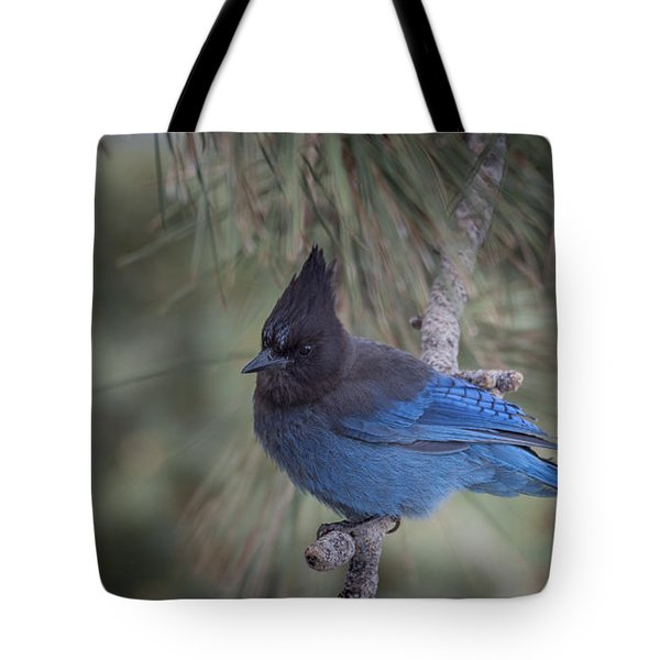 Steller's Jay Tote Bag by Tyson Smith