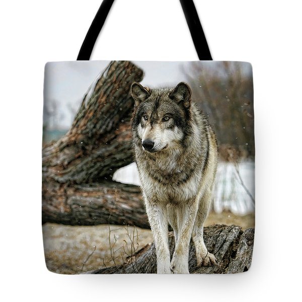 Still Wolf Tote Bag