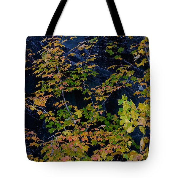 Stone Tree Tote Bag by Kevin Blackburn