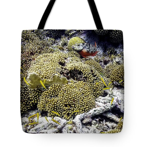 Tote Bag featuring the photograph Stoplight Parrotfish And Yellow Chromis by Perla Copernik