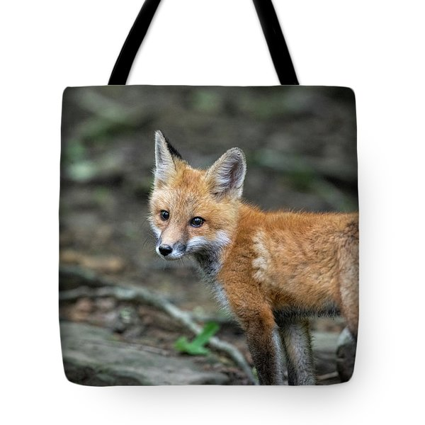 Stopping To Take A Look Tote Bag