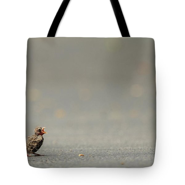 Story Of The Baby Chipping Sparrow 3 Of 10 Tote Bag by Joni Eskridge