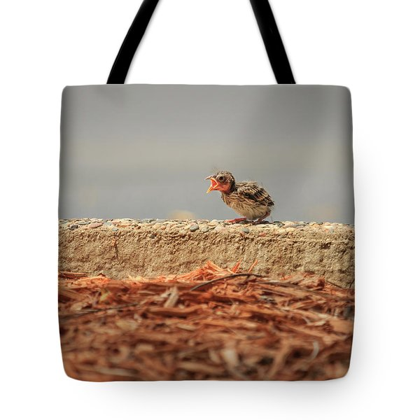 Story Of The Baby Chipping Sparrow 6 Of 10 Tote Bag