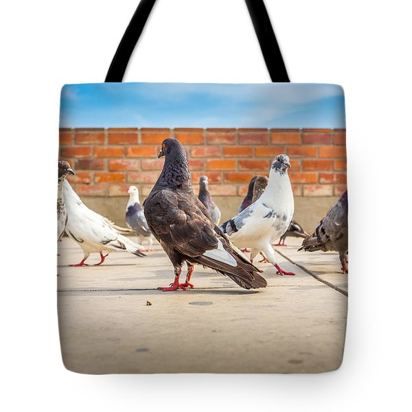 Tote Bag featuring the photograph Street Pigeons. by Gary Gillette