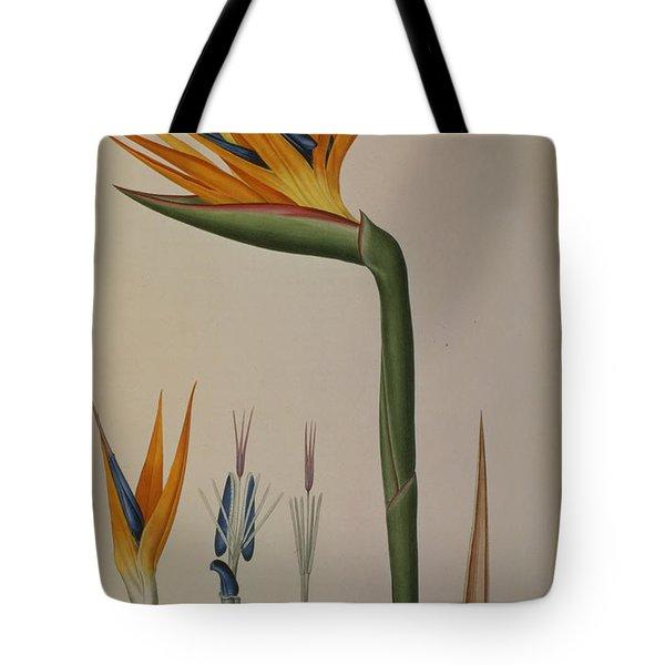Strelitzia Reginae Tote Bag by Pierre Joseph Redoute