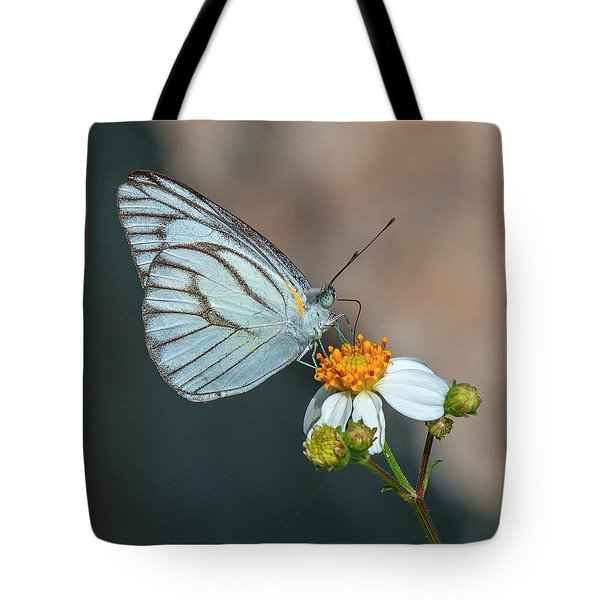 Striped Albatross Butterfly Dthn0209 Tote Bag