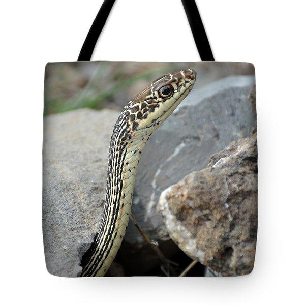 Striped Whipsnake, Masticophis Taeniatus Tote Bag