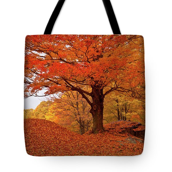 Tote Bag featuring the photograph Sturdy Maple In Autumn Orange by Jeff Folger