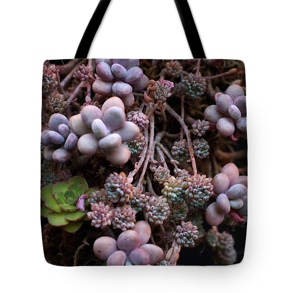 Tote Bag featuring the photograph Succculents  by Catherine Lau
