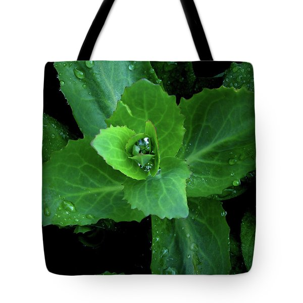 Succulent After The Rain  Tote Bag