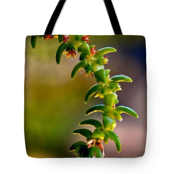 Succulent Hanging Tote Bag by Josephine Buschman