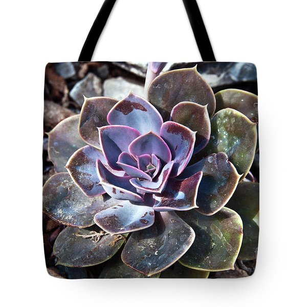 Tote Bag featuring the photograph Succulent Plant Poetry by Silva Wischeropp