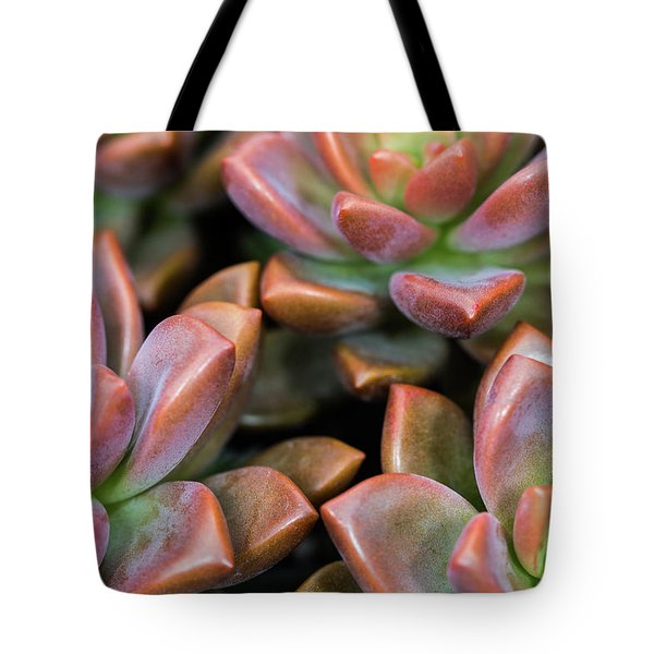 Tote Bag featuring the photograph Succulents by SR Green