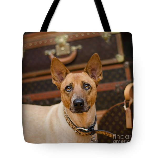 Tote Bag featuring the photograph Sugar by Irina ArchAngelSkaya