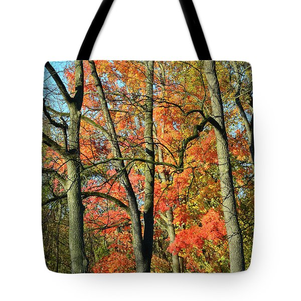 Tote Bag featuring the photograph Sugar Maple Brilliance by Ray Mathis