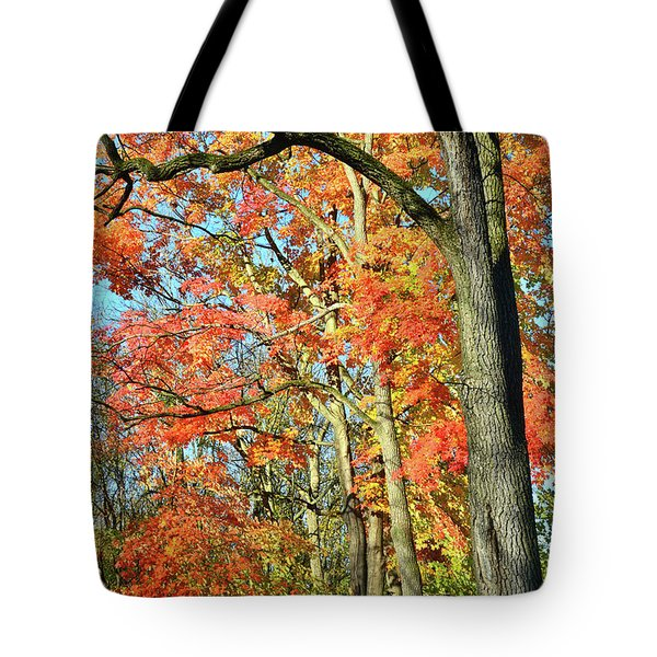 Tote Bag featuring the photograph Sugar Maple Stand by Ray Mathis