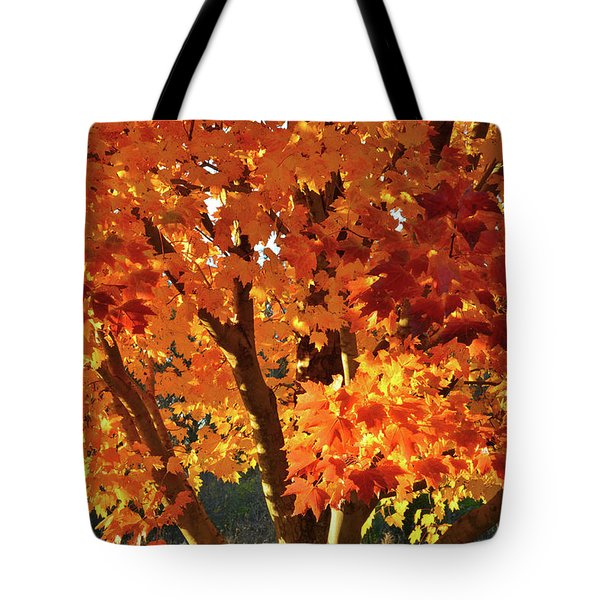 Tote Bag featuring the photograph Sugar Maple Sunset by Ray Mathis