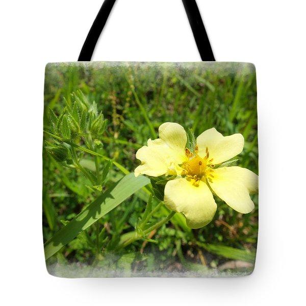 Sulphur Cinquefoil Tote Bag by Scott Kingery