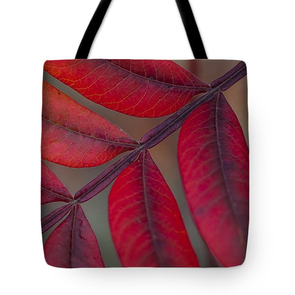 Sumac Tote Bag by Steve Gravano