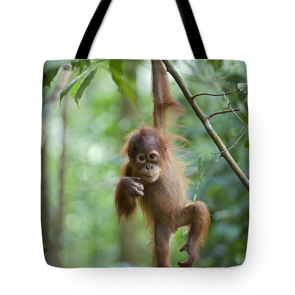 Tote Bag featuring the photograph Sumatran Orangutan Pongo Abelii One by Suzi Eszterhas