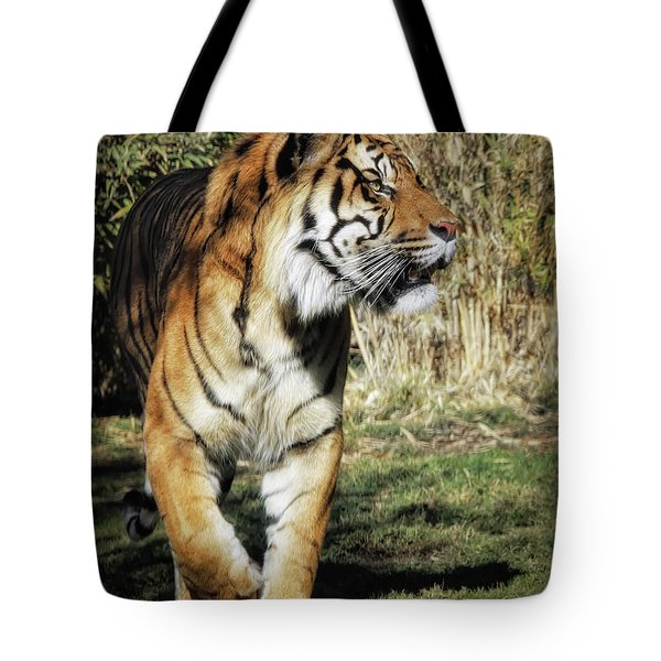 Sumatran Tiger  Tote Bag