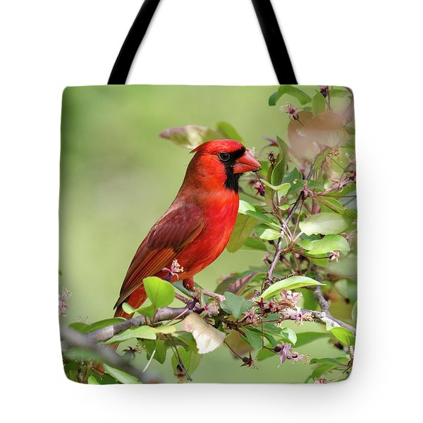 Summer Cardinal Tote Bag