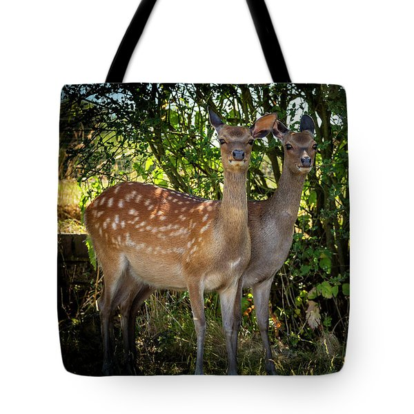 Tote Bag featuring the photograph Summer Sunshine Meadow by Cliff Norton