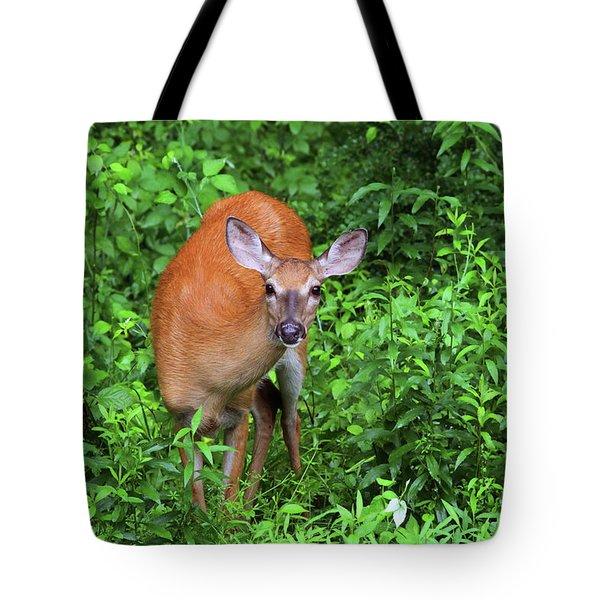 Summertime Visitor Tote Bag by Karol Livote