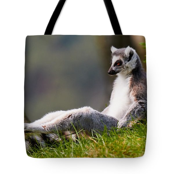 Sun Bathing Ring-tailed Lemur  Tote Bag