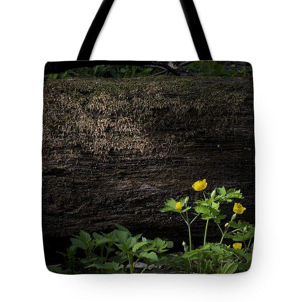 Sun Beam On Log Tote Bag