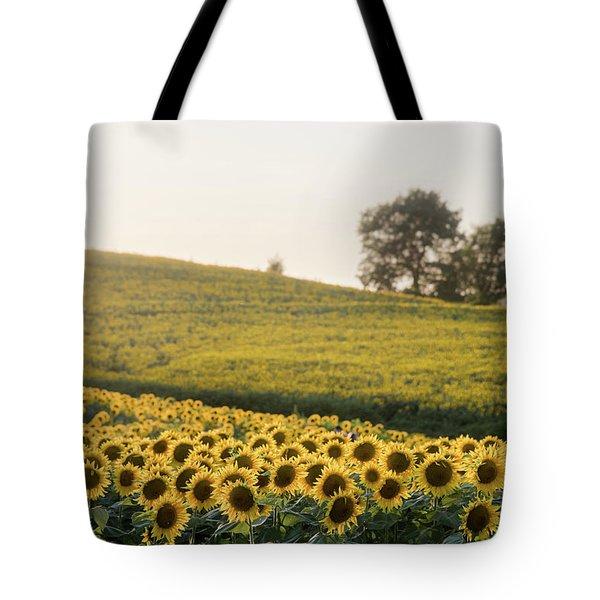 Sun Flowers II Tote Bag