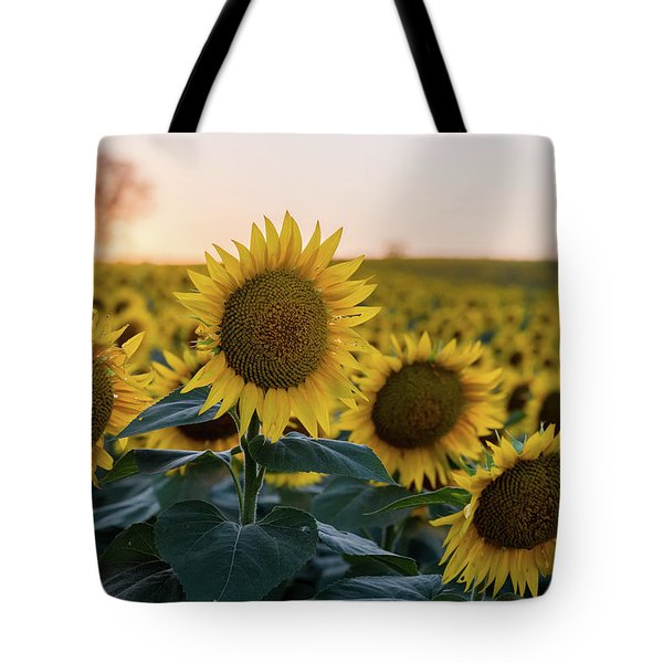 Sun Flowers IIi Tote Bag