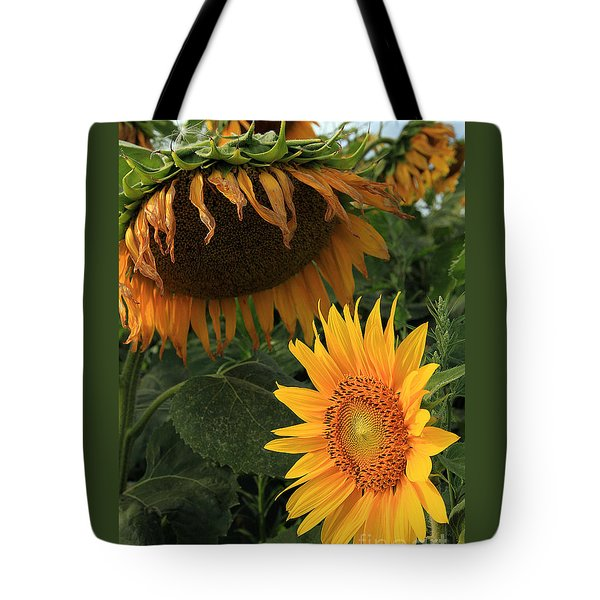 Sun Flowers  Past  And  Present  Tote Bag