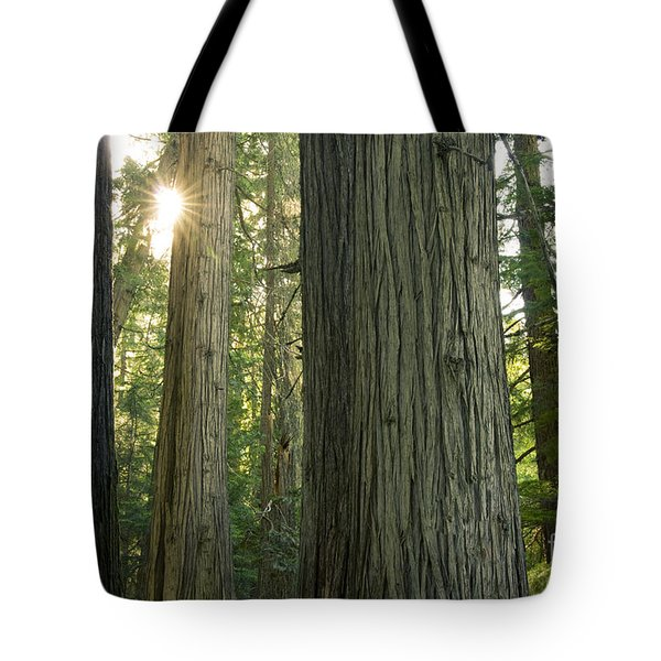 Sun In The Cedars Tote Bag by Idaho Scenic Images Linda Lantzy