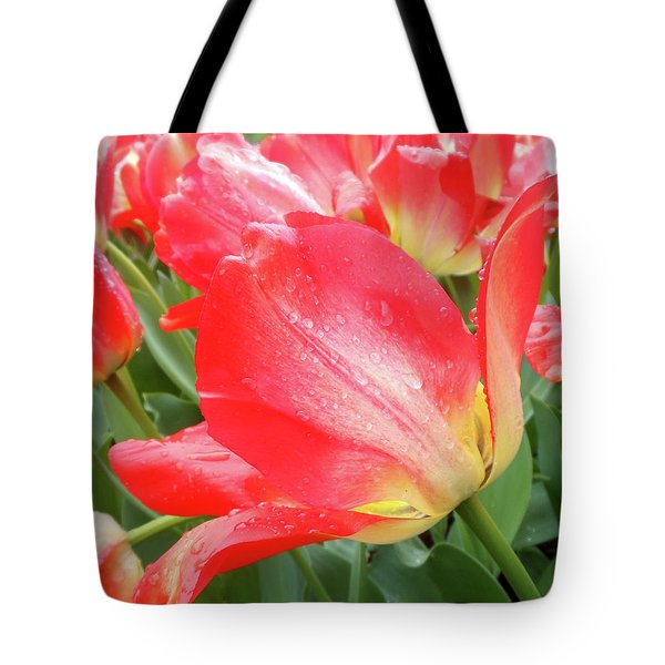 Sun Lights Tulips After Spring Rain Tote Bag